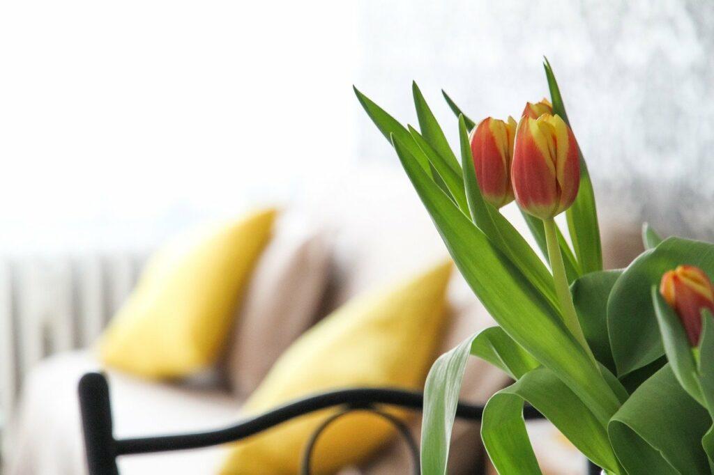 apartment, flowers, tulips